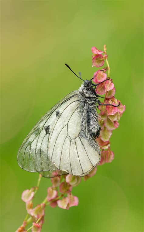 Free Images : nature, blossom, wing, white, meadow, leaf
