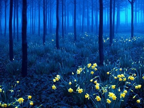 The Most Beautiful Forests In The World | DailyDistraction
